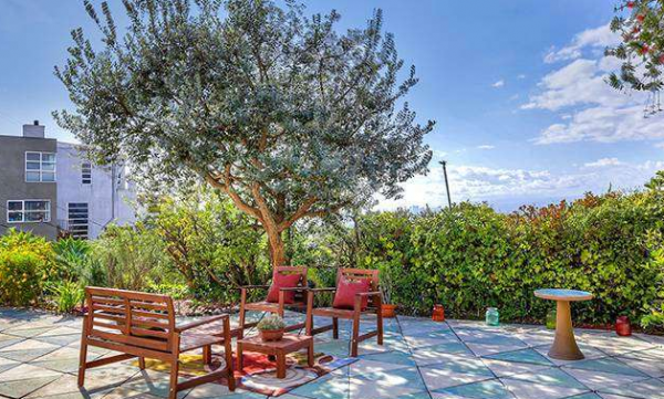 patio + olive tree